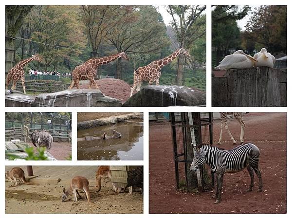 動物們.jpg
