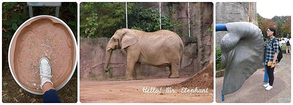 大象先生.jpg
