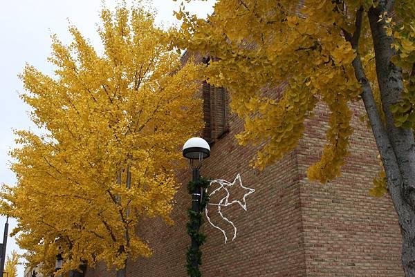金色銀杏在米德蘭2.JPG