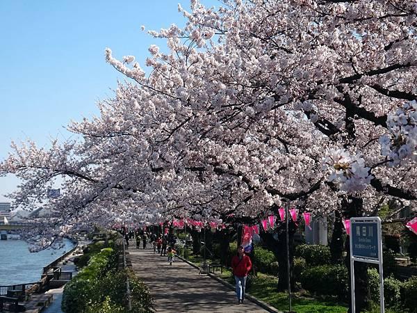 隅田公園29.JPG