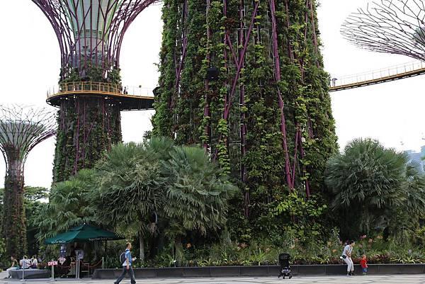 新加坡濱海灣花園27.JPG