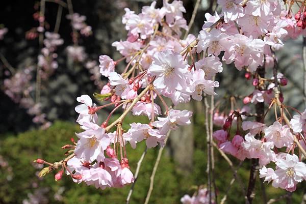 牛島神社17.JPG