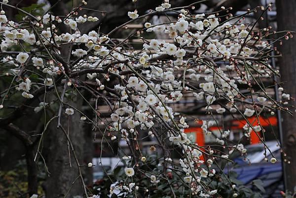 神田神社26.JPG