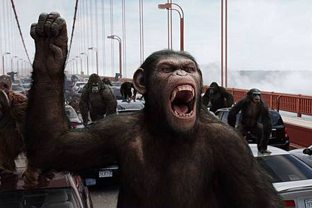 apes3.jpg