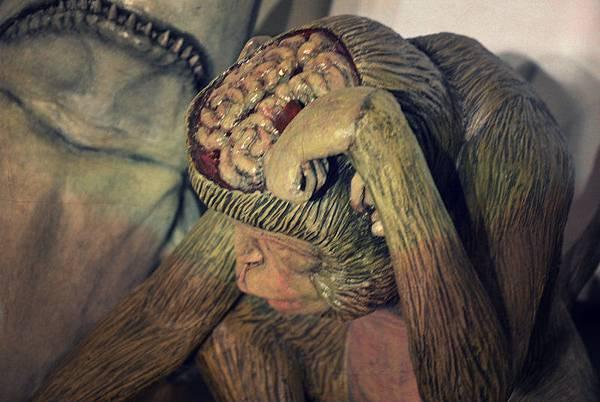 b7fcf1_monkey
