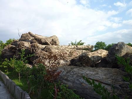 林場入口陳列的漂流木,走近就被滿滿的樟木香氣包圍。.JPG