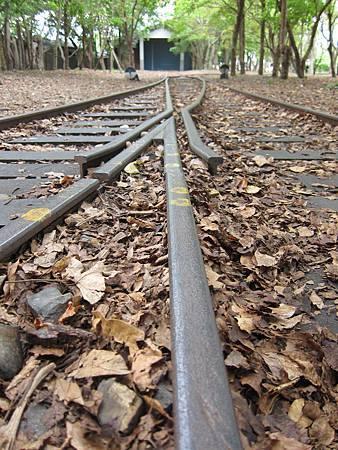 散落木塊與落葉的舊運木鐵道.JPG