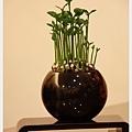 唐山種子樹