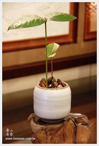 唐山居家-種子樹