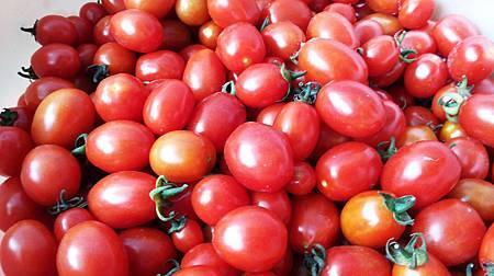 蕃茄(2)