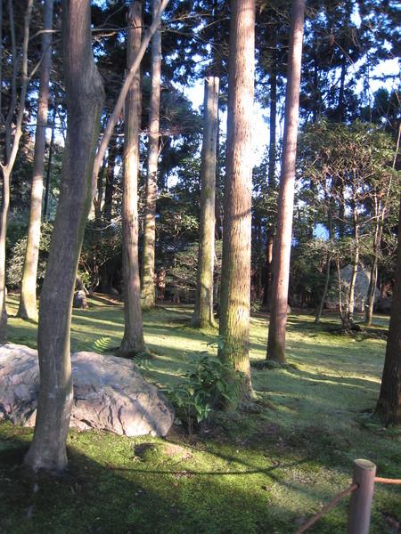 龍安寺庭院的青苔