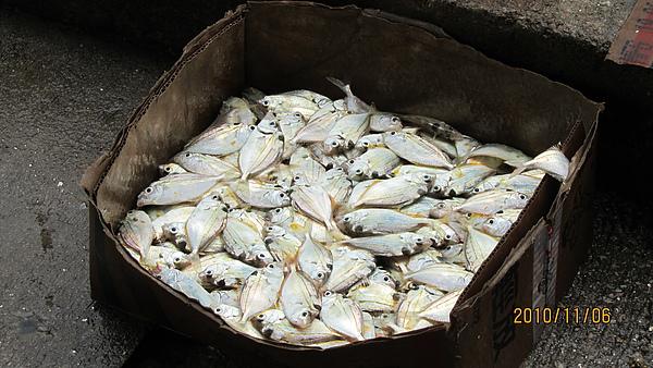 港邊釣魚人的魚貨
