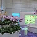 二航廈的蘭花造景區