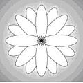 蓮花_光的課程「圖形與密碼」