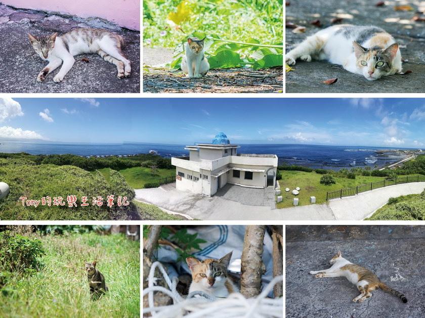 台灣最東邊小漁港裡的隱藏貓村 - 馬崗漁港