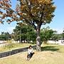 2013-10-18景福宮秋天.jpg