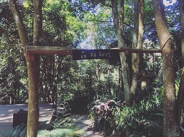 森林秘境.jpg