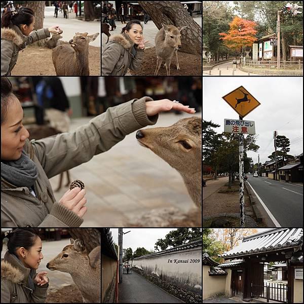 In Kansai 2009
