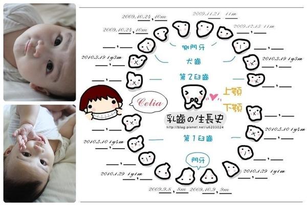 乳牙生長史-11、12.JPG