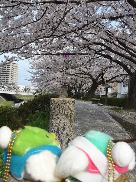 110415-Toripy日記.jpg