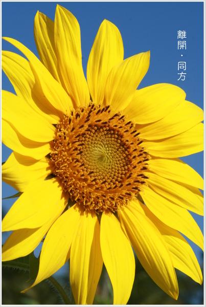 IMG_0029-1.jpg
