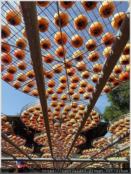 |新埔柿餅季|年度風華再現。金漢柿餅觀光農園