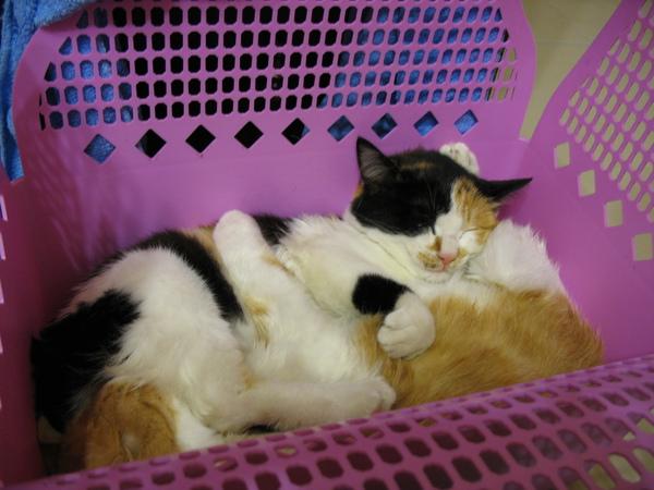 緩兒小時候跟哥哥抱在一起睡