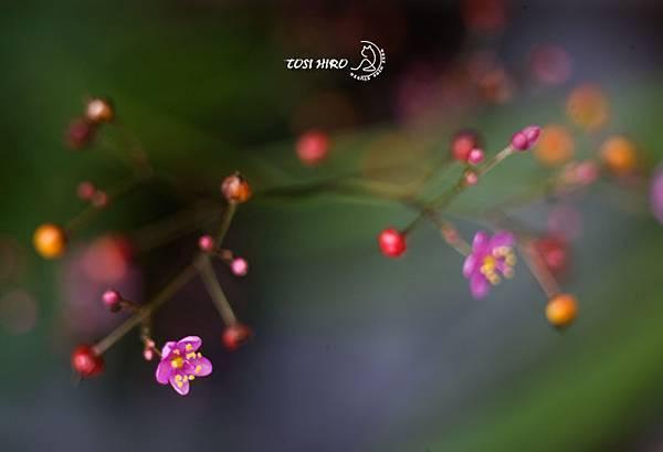 為愛高歌 -01.jpg