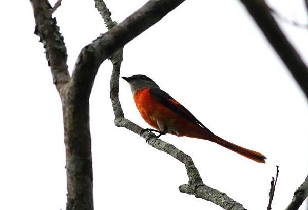 賞鳥活動--知本二區賞鳥