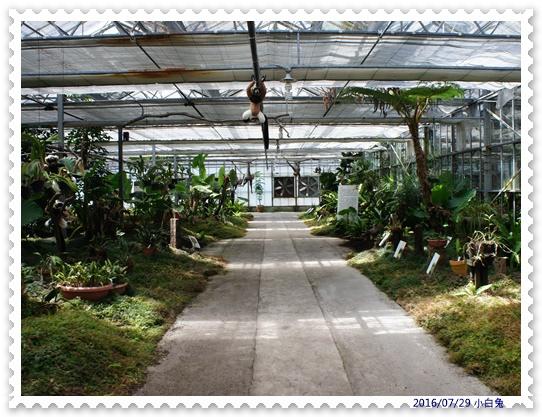 金車蘭花園-7.jpg