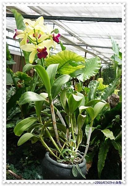 金車蘭花園-10.jpg