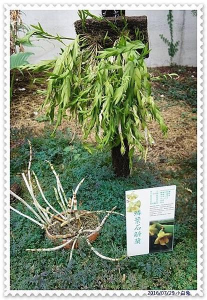 金車蘭花園-9.jpg
