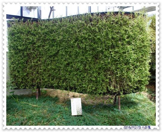 金車蘭花園-19.jpg