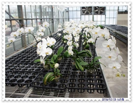 金車蘭花園-23.jpg