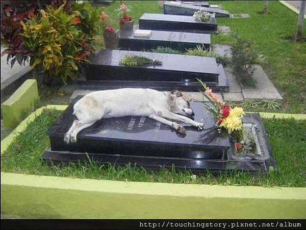 【勵志感人故事】忠心的狗兒,對不起