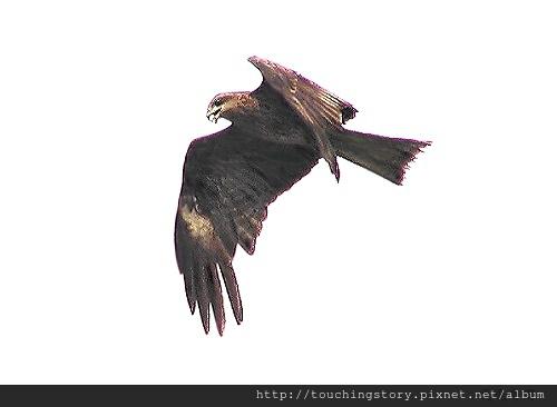 【勵志感人故事】阿爾卑斯山鸚鵡與老鷹