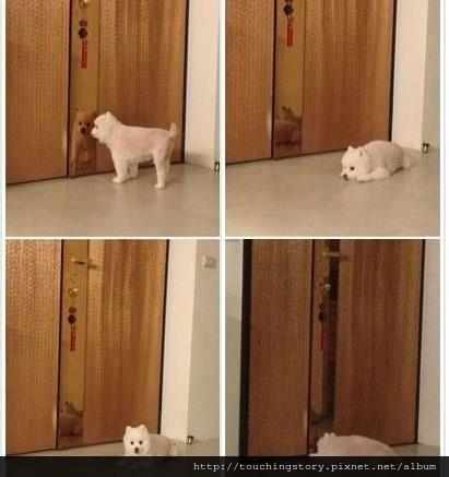 【勵志感人故事】遇見這樣的狗狗,你要疼它一輩子