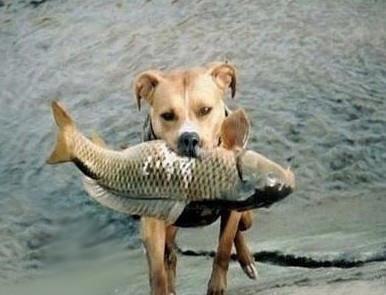 【勵志感人故事】感動世界的捕魚犬