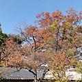 20111023072.jpg