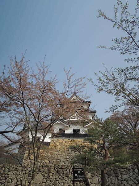 20130415_Nikon229