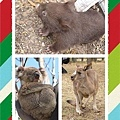 Melbourne_Animals_Resized