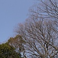 20140131_Kansai_Lumix_060.jpg