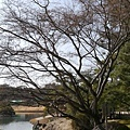 20140131_Kansai_Lumix_062.jpg