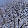 20140131_Kansai_Lumix_065.jpg