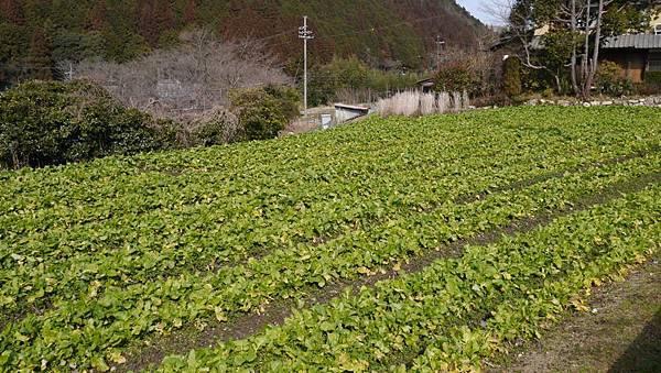 20140201_Kansai_Lumix_012.jpg