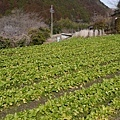 20140201_Kansai_Lumix_012.jpg