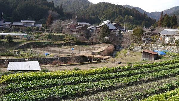 20140201_Kansai_Lumix_124.jpg