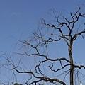 20140202_Kansai_Lumix_23.jpg
