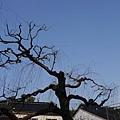 20140202_Kansai_Lumix_24.jpg