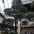 20140203_Kansai_Z1_074.jpg
